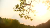 Sun shining through green leaves in forest video