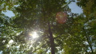 SLOW MOTION: Sun shining through green tree tops in sunny spring video
