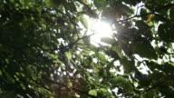 Sun shining through green tree tops video