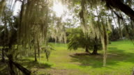 Sun shining through live oak tree canopy with spanish moss video