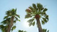 SLOW MOTION: Sun shining through tall palm tree video