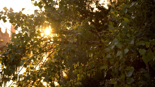 Sun Shining Through The Leaves video