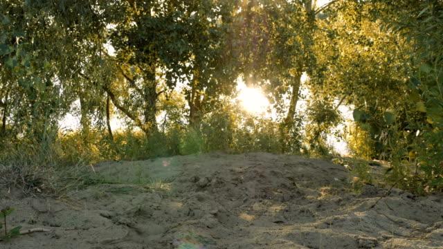 Sun shining through tree branches on sandy beach video