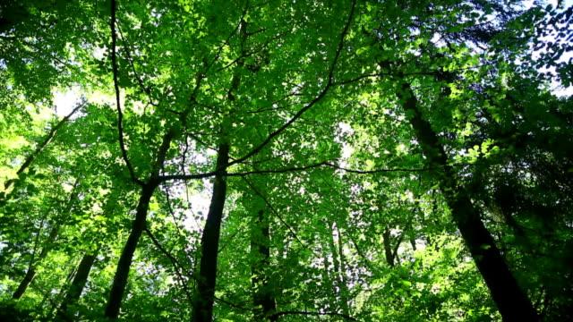 PAN Sun Shining Through Tree Tops video