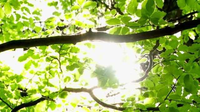 Sun shining through tree video