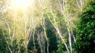 Sun Shining through trees video