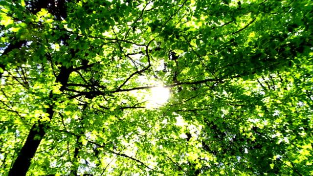 ZOOM Sun Shining Through Treetop video