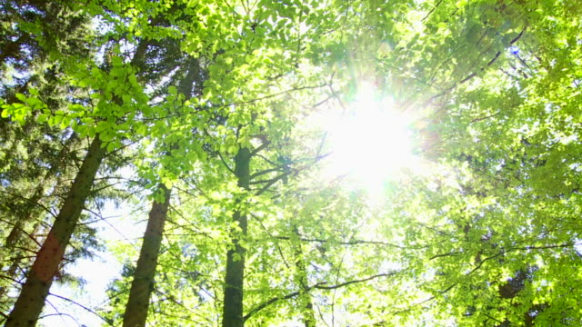 PAN Sun Shining Through Treetops video