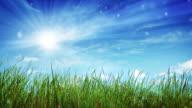 Sun, sky and grass video