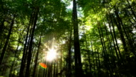 Sun Through Forest Time Lapse video