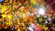 Sun through leaves. video