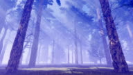 Sunbeams in magical foggy pine forest video