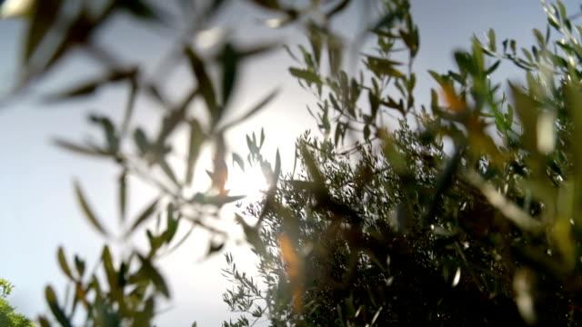 sunbeams in mediterranean Garden in France video