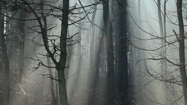 Sunbeams in strong fog, the forest, Poland. video