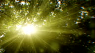 Sunbeams seen through trees (loopable) video