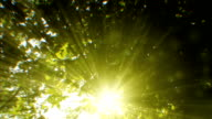 Sunbeams seen through trees (loopable) video