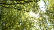 Sunbeams shining through lush green tree canopies and branches in sunny spring video