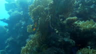 Sun-Drenched Coral Reef video