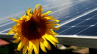 HD CLOSE UP: Sunflower and solar panels video