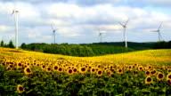 Sunflower Field and Wind Turbines video