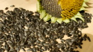 Sunflower seeds, sunflower flower on the wooden table, tilt video
