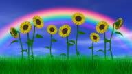 Sunflowers Under a Rainbow video