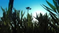 Sunlight and Lens Flare through Plants video