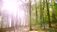 WS Sunlight Between The Trees video