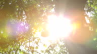 Sunlight flare through green leaves blowing in the breeze video