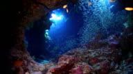 Sunlight Illuminates a Underwater Cave video