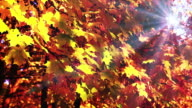 Sunlight in autumn forest video