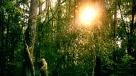 Sunlight In Green Forest video