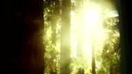 Sunlight in the forest video