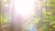 WS Sunlight In The Forest video