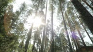 Sunlight In The Green Forest video
