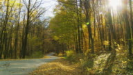 HD DOLLY: Sunlight Over The Forest Road video
