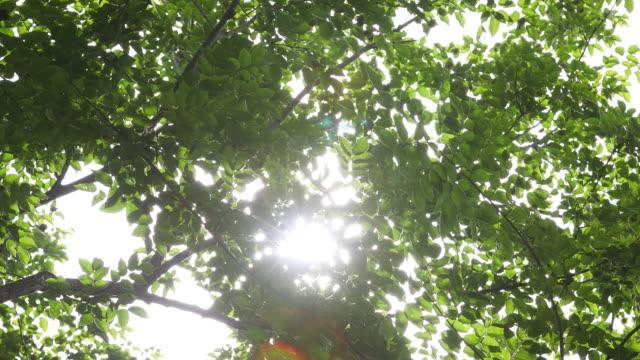 Sunlight seen through branches video