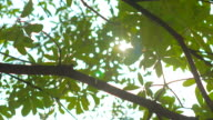 Sunlight Solar Power through leaves and branches video