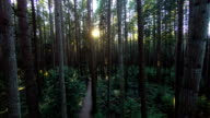 Sunlight Through the Forest video