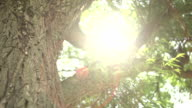 Sunlight trough Tree video