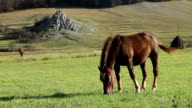 Sunny Afternoon Grazing Horse video