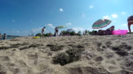 Sunny beach time lapse panorama video