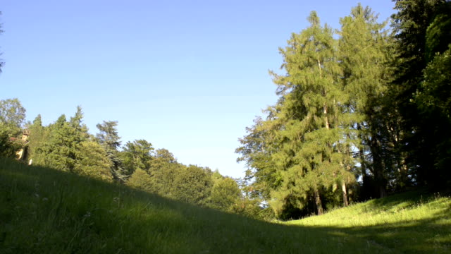 Sunny day in nord Italy park outdoor dolly video HD video