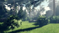 Sunny day in the magical pine forest video