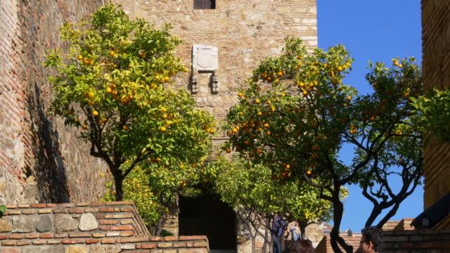 sunny day mandarine tree in alcazaba castle 4k video