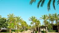 Sunny day, palm trees promenade, Salou in Catalonia video