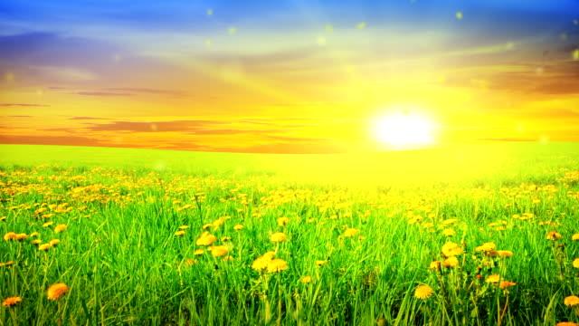 Sunny field video