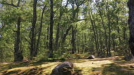 Sunny forest glade video
