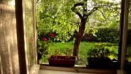HD: Sunny Garden in The Rain video