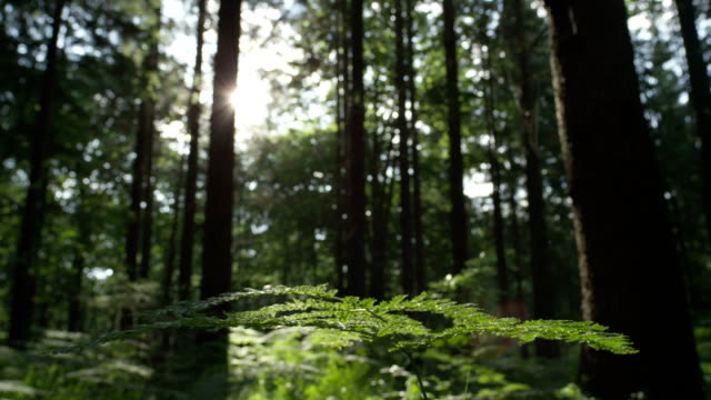 SLOW MOTION: Sunny green forest close up video
